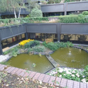 Pond on the Roof Garden August 2014