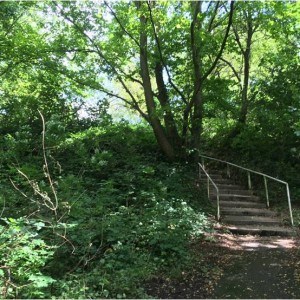 Steps leading from the higher grassy level to the central wooded area in Sandy Dell