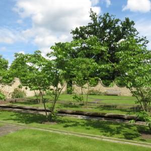 The Quiet Garden