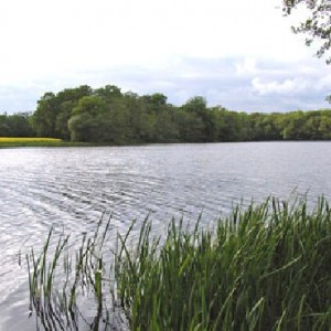 Ewhurst Pond looking across Park Copse