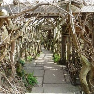 The large pergola, repaired in 2008, with its  Wisteria, thought to be original, was likely planted in the 1930's.