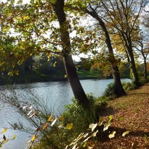Shrubbery pond